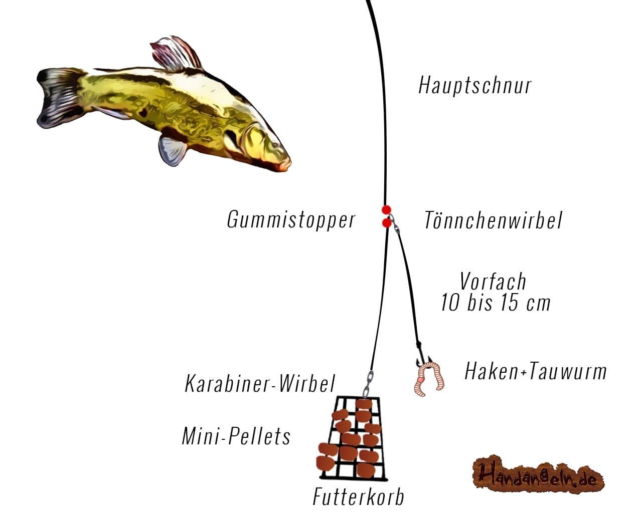 Illustration Selbsthakmontage Schleie Friedfisch