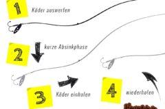 Spinnfischen Montage – top 5 für Forelle, Zander, Barsch, Hecht & Wels