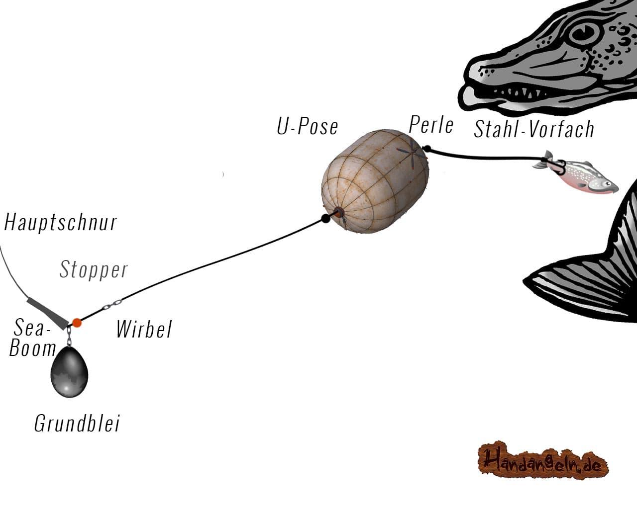 Illustration U-Posenmontage Hecht Raubfisch