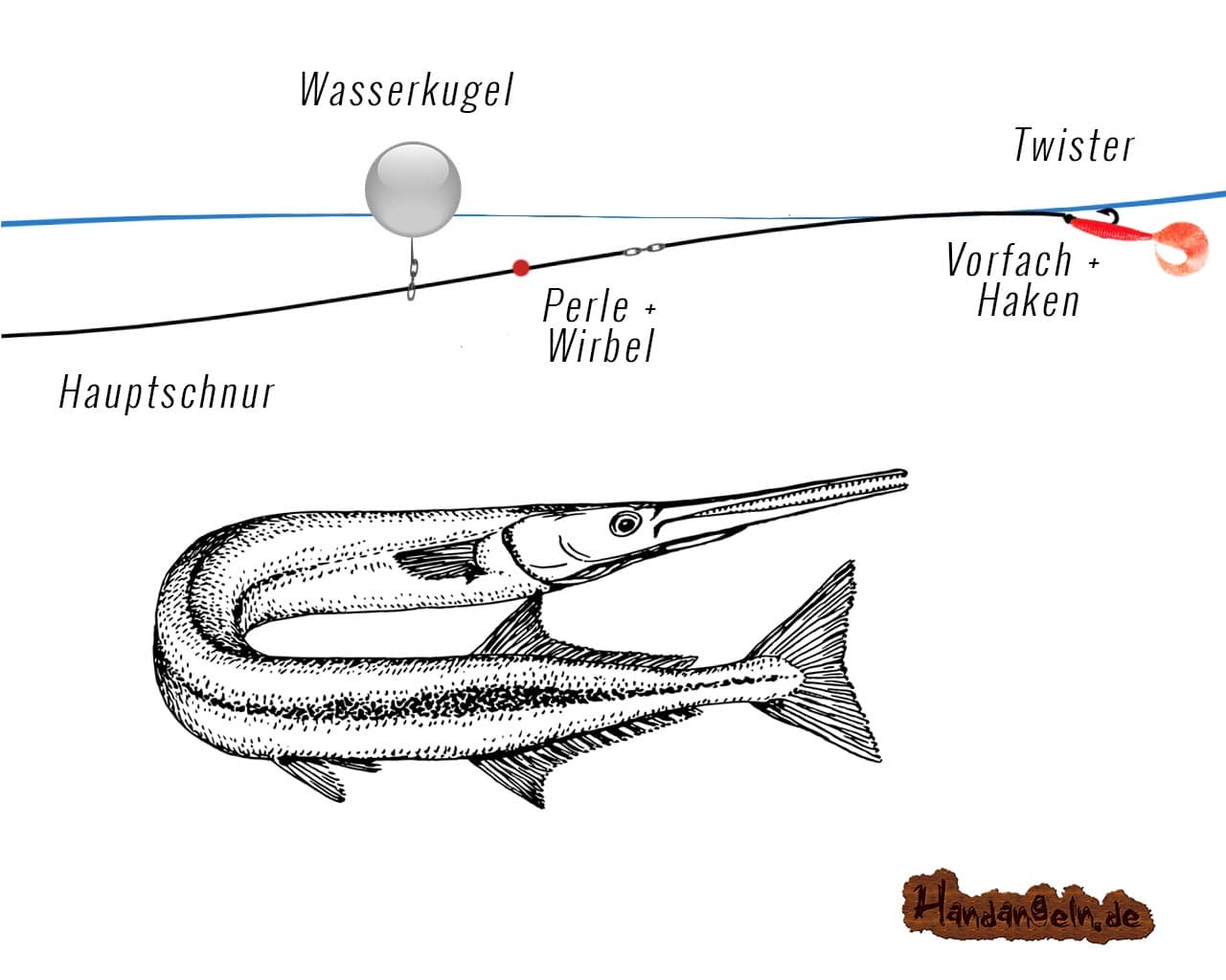 Illustration Wasserkugel Montage Hornhecht Garfish Belonidae