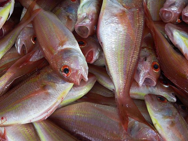Welsangeln mit Köderfischen