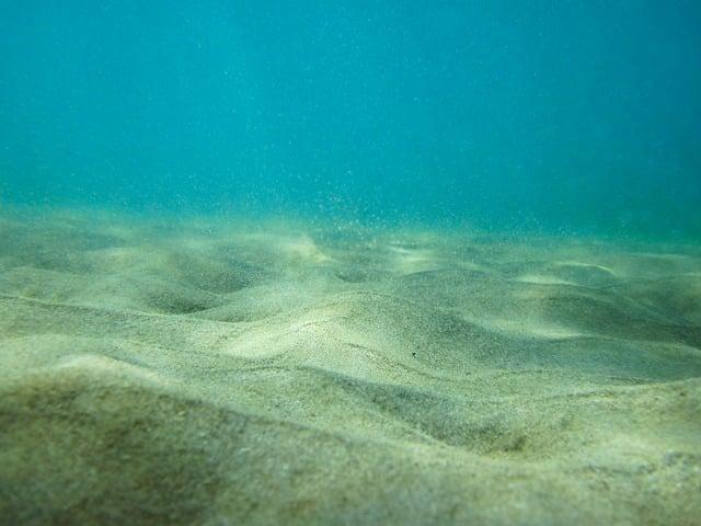 Zander Lebensraum - Sand